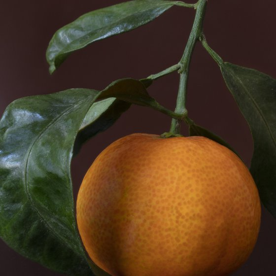 Link to shop item: Clementines